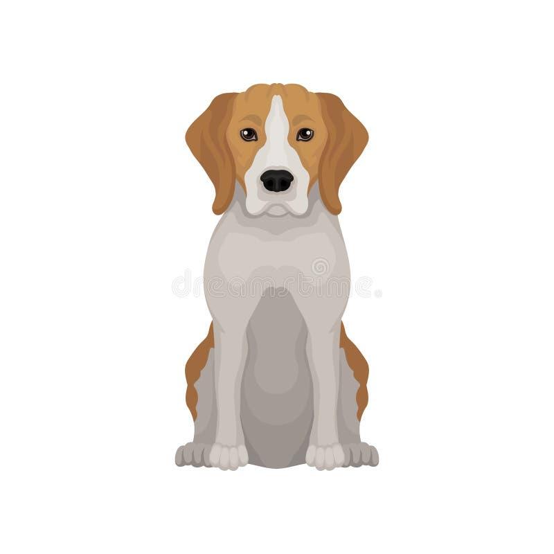 Симпатичный бигль в положении усаживания Малая охотничья собака Коротк-с волосами щенок с длинными ушами и милым намордником Плос иллюстрация штока