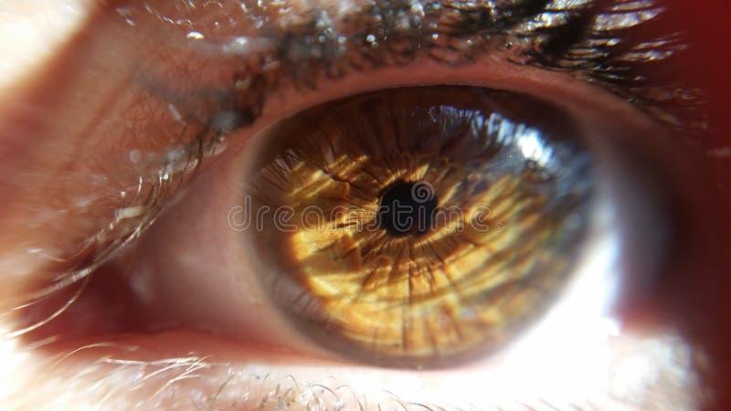 симпатичный глаз стоковые фото