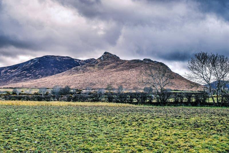 Симпатичный ландшафт гор с зеленой травой стоковое фото rf