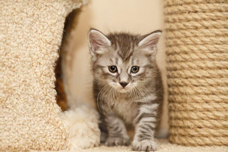 Симпатичный маленький котенок стоковое фото rf