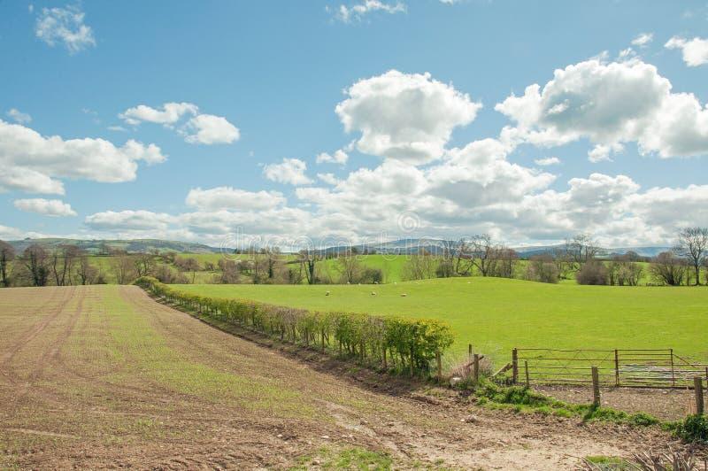 Симпатичный пейзаж летнего времени в сельской местности Welsh стоковые изображения