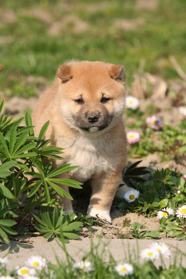 симпатичный щенок портрета стоковое фото