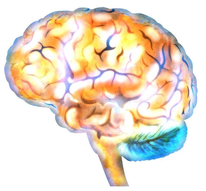 Синапсы нейрона мозга иллюстрация штока