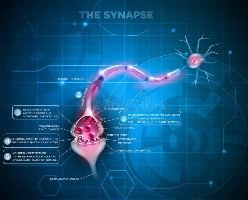 Синапс нейрона иллюстрация штока
