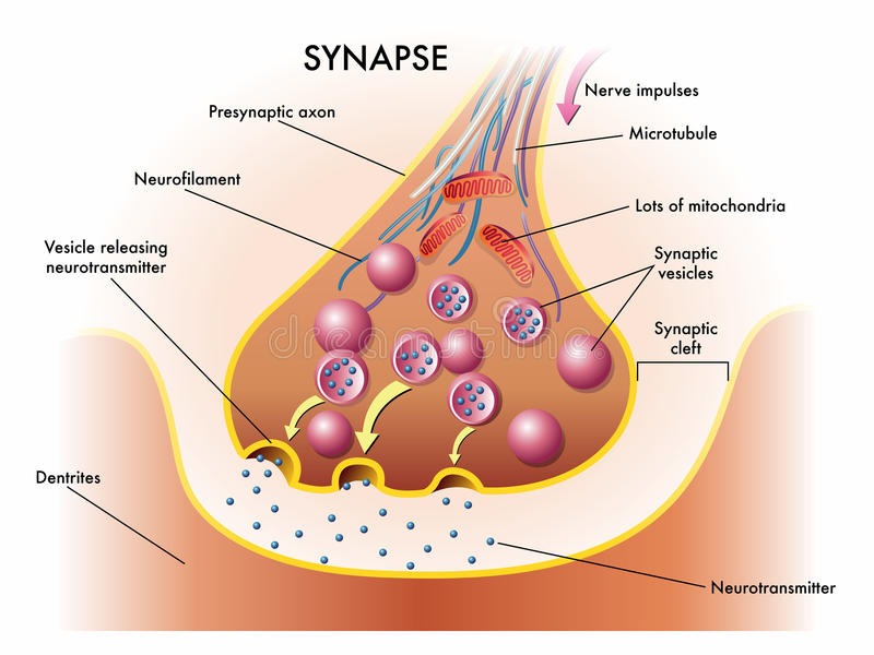 an in depth look at synapse communication methods Click download or read online button to get nanoscale imaging of synapses part 1 provides an in-depth look at includes in-depth coverage of synapse.