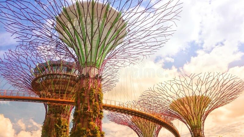 Сингапур Осень 2018 Supertrees в садах заливом Около гостиницы песков залива Марины Мост от дерева к дереву голубое пасмурное неб стоковые изображения