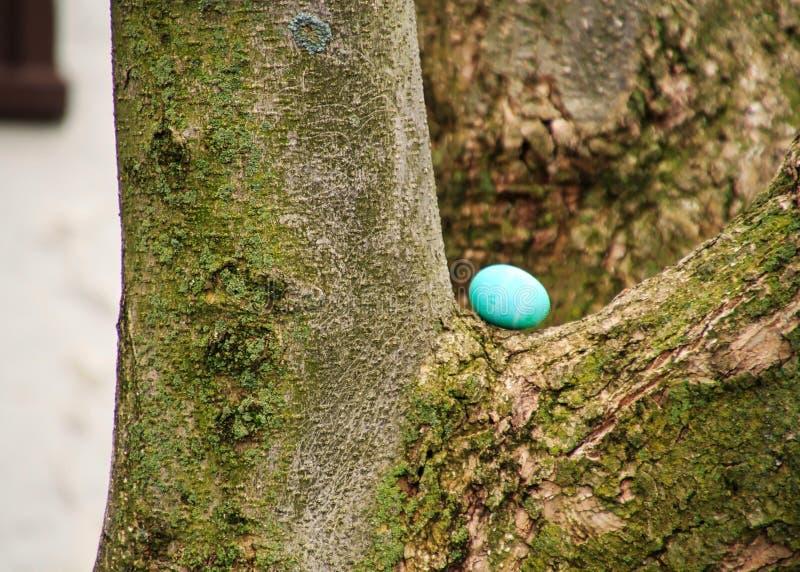 Сине-покрашенное пасхальное яйцо спрятано на обманщике дерева стоковые изображения
