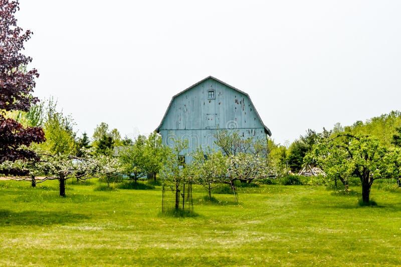 Синий сарай с Apple Orchard - Spring стоковое изображение