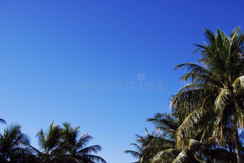 синь заволакивает валы неба ладони белые стоковые изображения rf