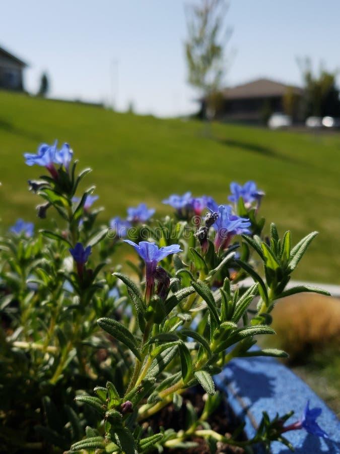 Синь на траве стоковая фотография rf