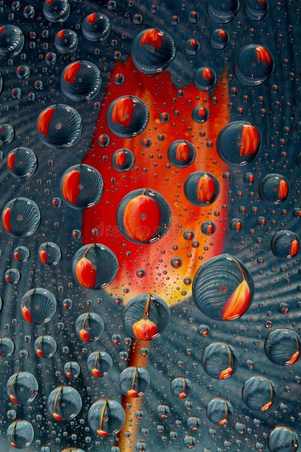 синь падает тюльпан стоковая фотография rf