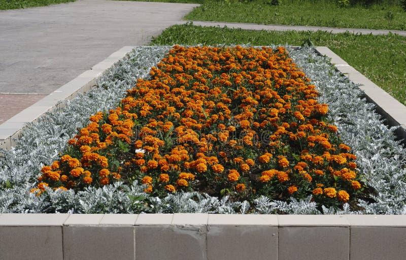 Синь, сирень, фиолет, фиолетовые цветки зацветает весной и лето на заходе солнца в саде городка стоковое фото