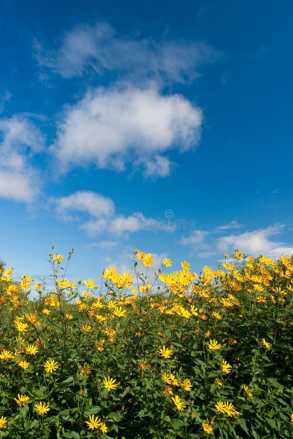 синь цветет небеса под желтым цветом стоковая фотография
