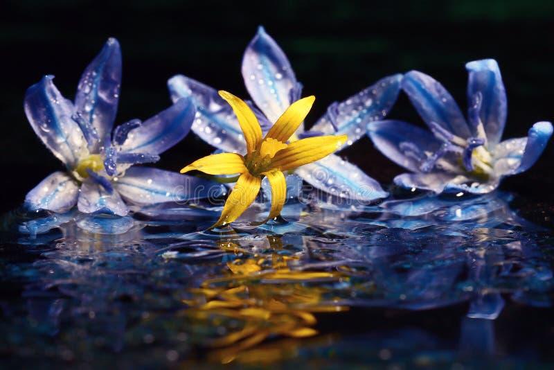 Синь цветет черный макрос предпосылки стоковая фотография rf
