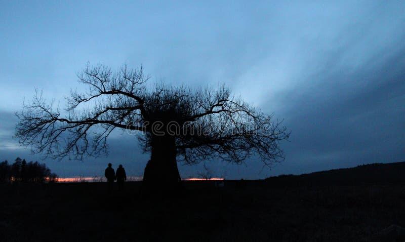 Синь strom захода солнца Германии дерева романтичная стоковые изображения rf