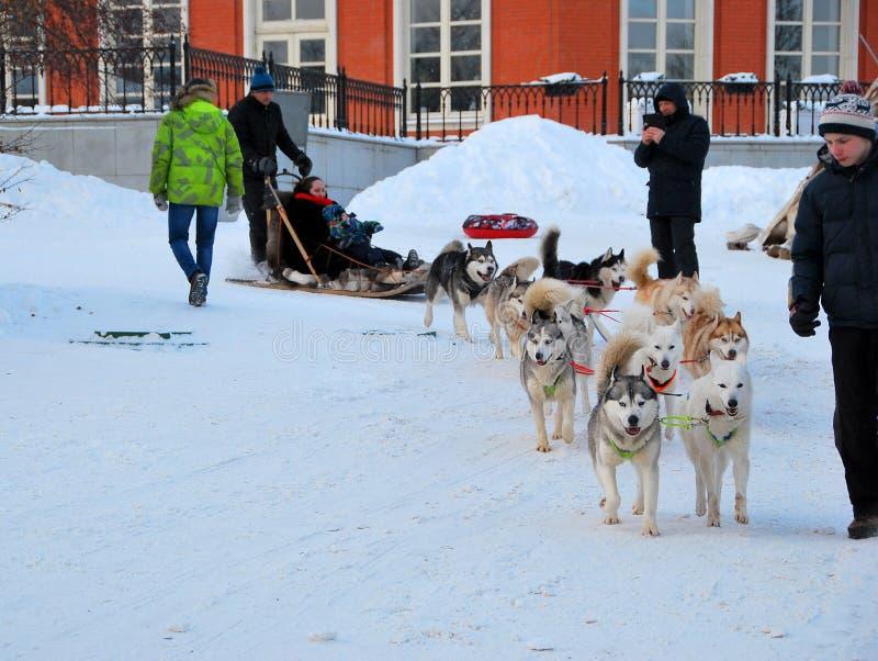 Сиплое катание на лыжах в парке в зиме стоковая фотография