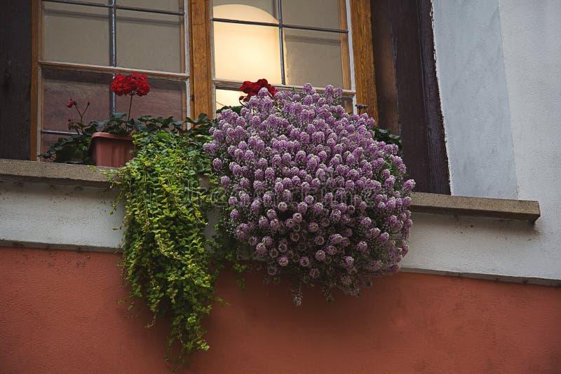 Сирень, розовый вереск, красный гераниум цветет и зеленый папоротник выходит стоковое фото