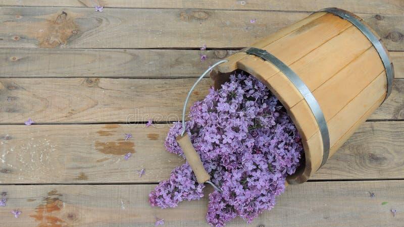 Сирень цветет в деревянном ведре на деревянной предпосылке стоковые изображения