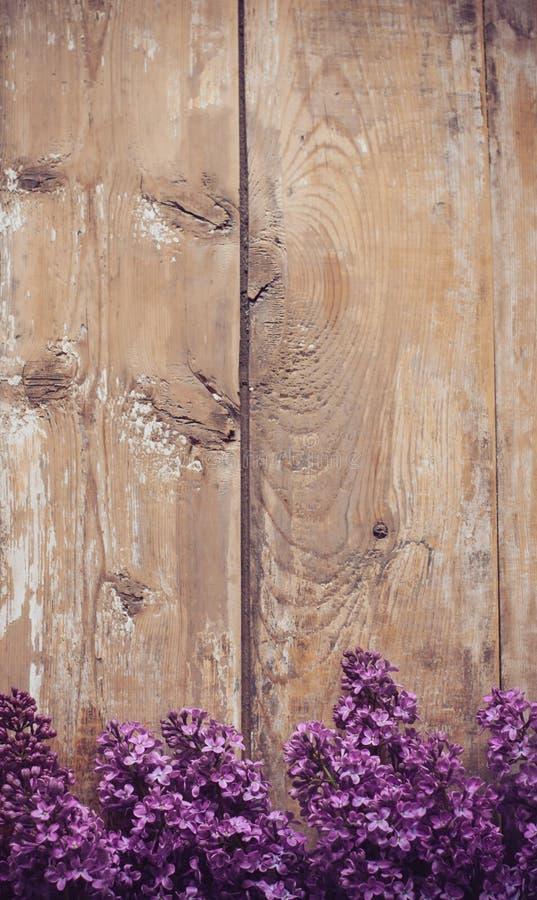 Сирень цветет предпосылка стоковая фотография rf