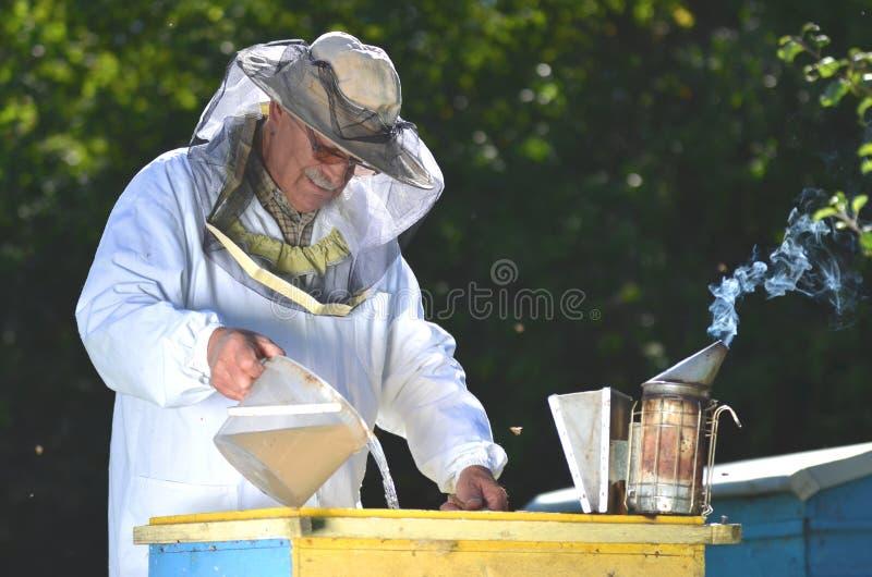 Сироп Beekeeper лить в фидер стоковые фотографии rf