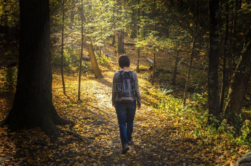 Сиротливая женщина идя на путь леса стоковая фотография