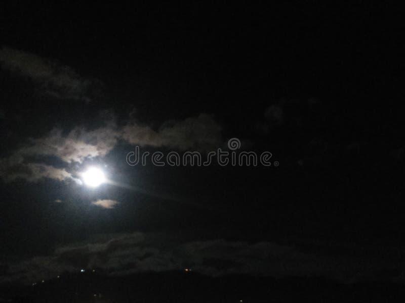 сиротливая ноча стоковое изображение rf