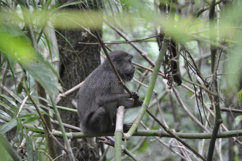 Сиротливая обезьяна сидя между кустами стоковое фото rf