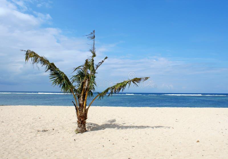 Сиротливая пальма младенца на пляже стоковое изображение