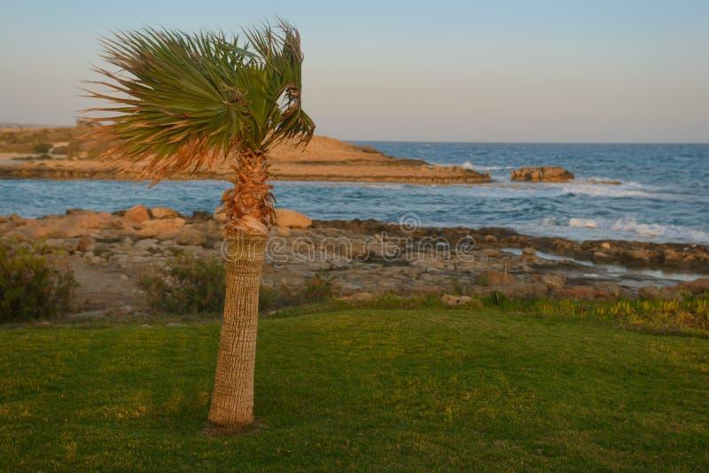 Сиротливая пальма на берегах среднеземноморского с ветром на заходе солнца стоковые изображения