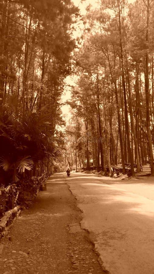 Сиротливая прогулка в лесе стоковые изображения