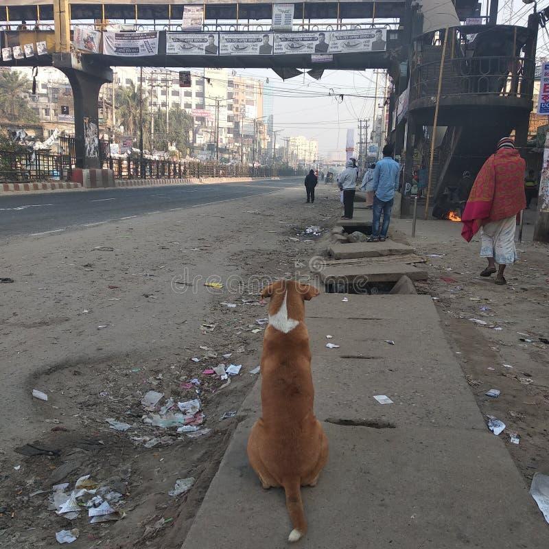 Сиротливая собака стоковая фотография