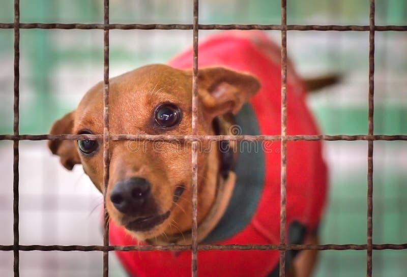 Сиротливая собака в клетке стоковые фотографии rf