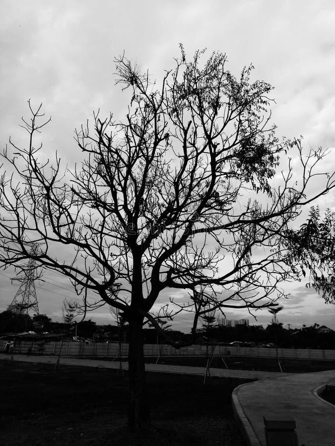 Сиротливая тень черноты дерева сухая и пасмурная под черным небом стоковые фото