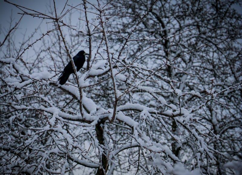 Сиротливая черная ворона стоковая фотография