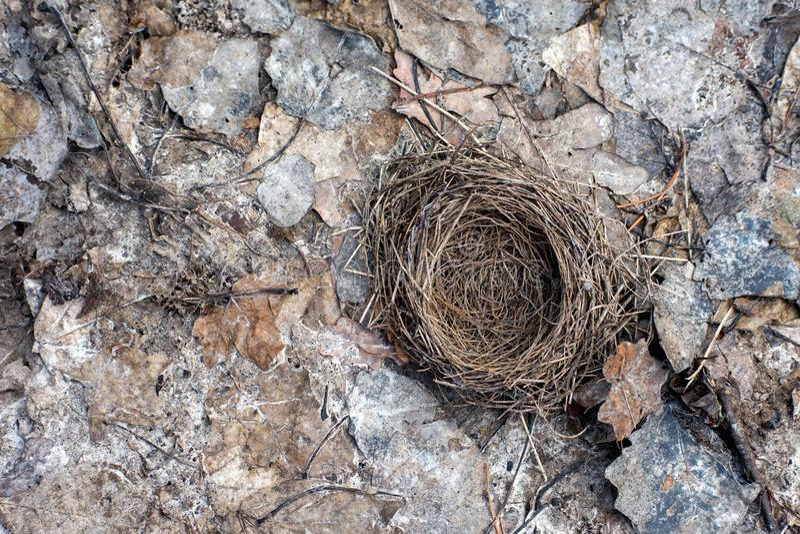 Сиротливое гнездо птицы стоковая фотография rf