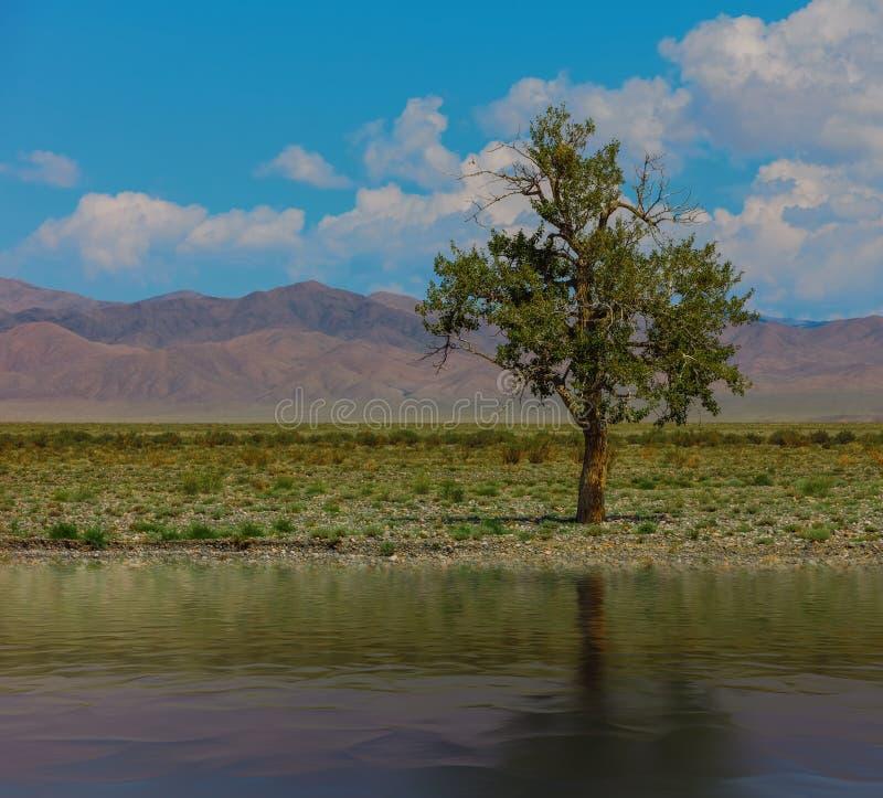 Сиротливое дерево в горах Монголия стоковое изображение rf
