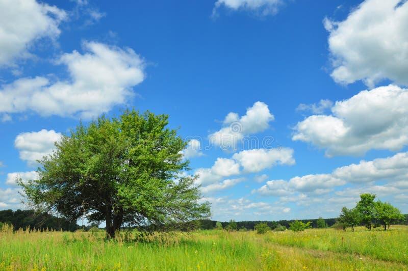 Сиротливое дерево в луге весеннего времени Сиротливое дерево в зацветая луге с красивыми облаками и ландшафтом стоковые фотографии rf