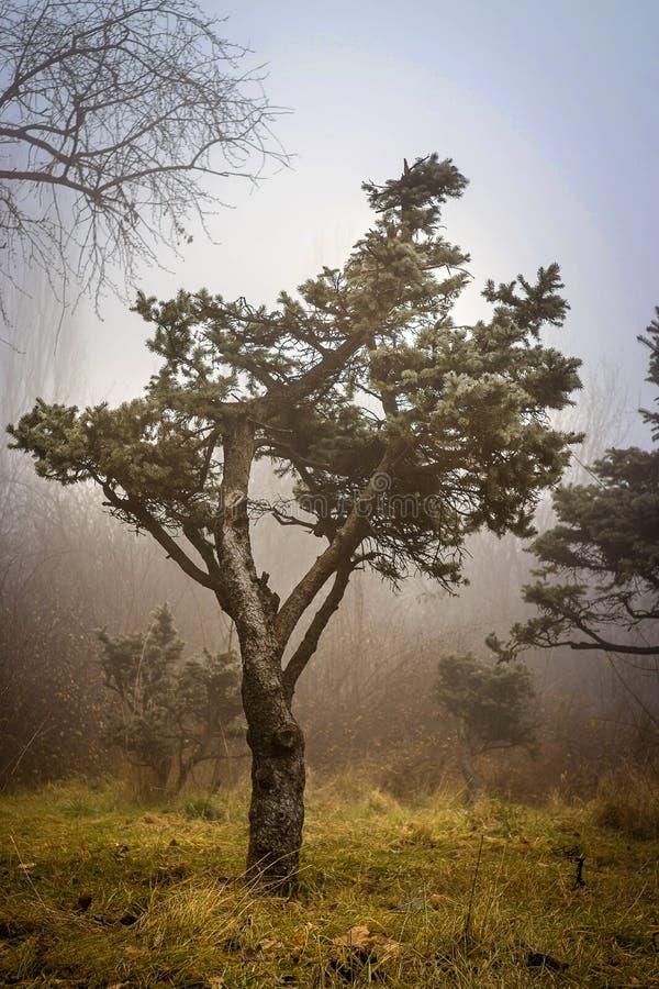 Сиротливое дерево в парке IOR стоковая фотография rf