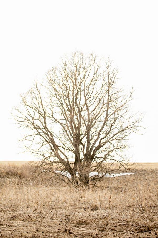 Сиротливое дерево в поле на весенний день стоковая фотография