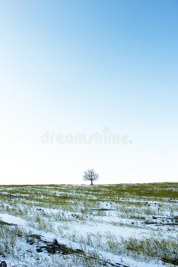Сиротливое дерево в снежном поле стоковое изображение