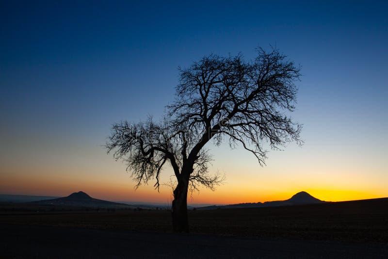 Сиротливое дерево в центральных богемских нагорьях, чехия стоковые фото