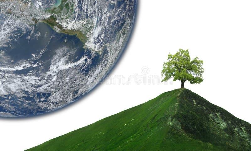 Сиротливое дерево на абстрактном горном пике стоковое фото rf