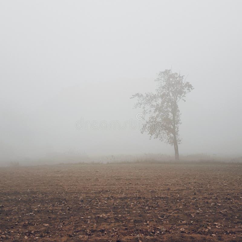 Сиротливое дерево на поле в тумане стоковое фото rf