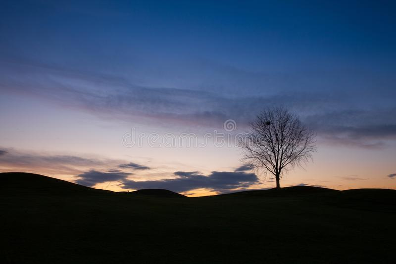 Сиротливое дерево на поле для гольфа стоковое изображение