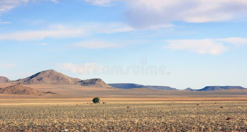 Сиротливое дерево неизвестно где стоковая фотография
