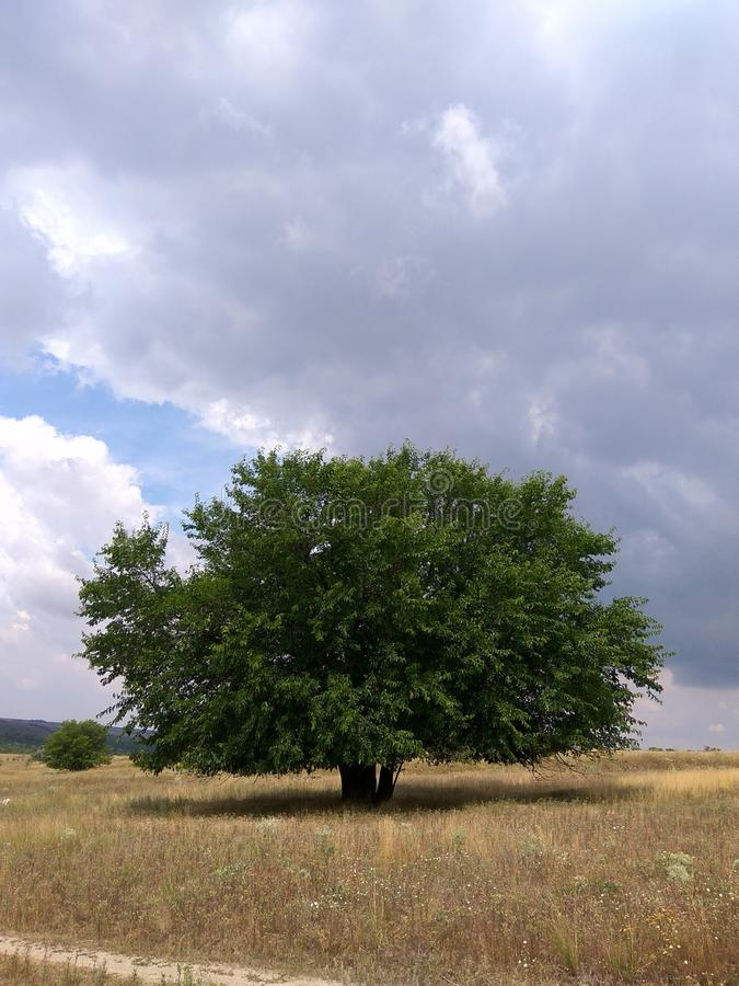 Сиротливое дерево под темными облаками стоковая фотография rf