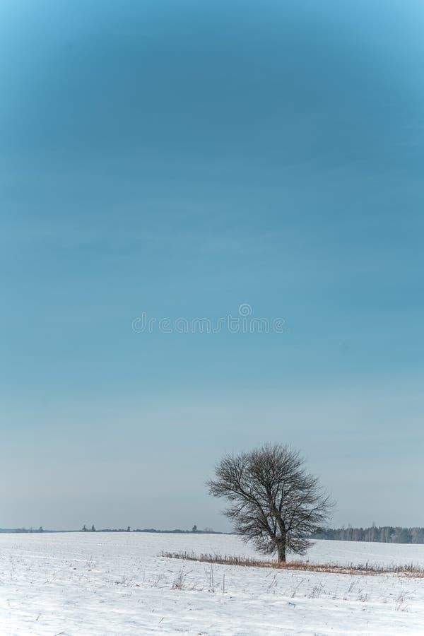 Сиротливое дерево стоит в снежном поле против голубого неба на солнечный день стоковое изображение