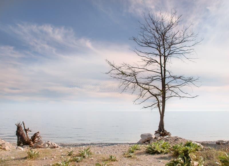 Сиротливое обнаженное дерево без листьев на seashore с ландшафтом неба влияния в стиле минимализма стоковое фото