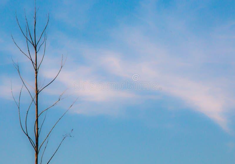 Сиротливое переплетенное дерево без листьев от осени сравнивая с красивым голубым небом с немного облаков стоковые изображения