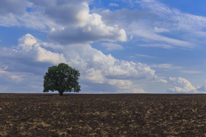 Сиротливое положение дерева на вспаханном поле на предпосылке красивых облаков стоковые изображения